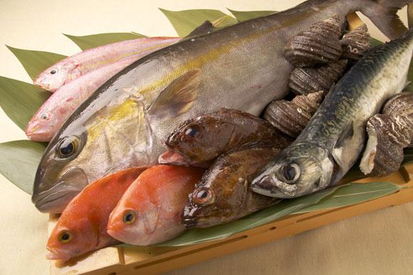 日本全国より漁港直送 その日にとれた鮮魚!